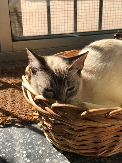 One Animal Basket Domestic Cat Pets Domestic Animals Animal Themes Feline Indoors  Mammal No People Close-up Day