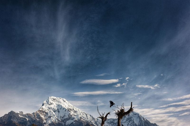 raven. Snow Winter Cold Temperature Nature Mountain Weather Sky Beauty In Nature Outdoors Cloud - Sky Annapurna Raven Trekking EyeEm Nature Lover EyeEm Best Shots Travel Destinations Landscape Day Low Angle View No People Perspectives On Nature Shades Of Winter