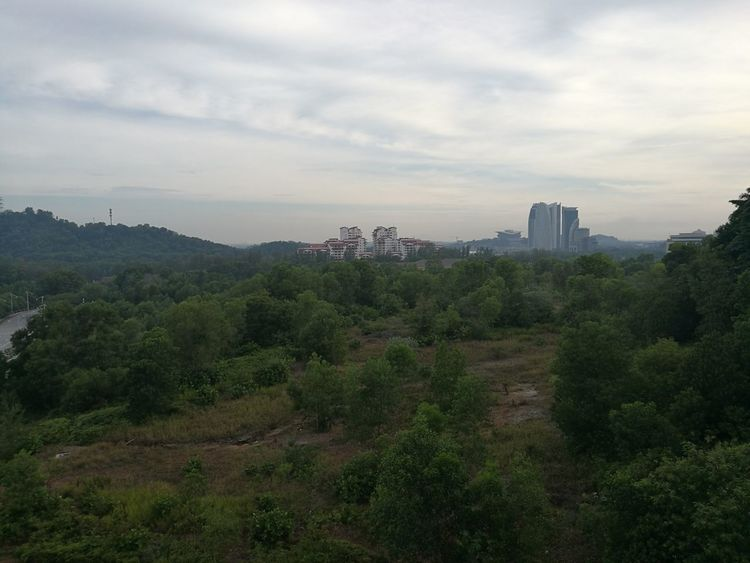Adapted To The City Environmental Conservation Tree Nature Forest City Outdoors Malaysia Nature Putrajaya,malaysia