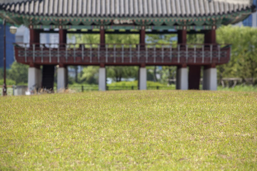 Beauty In Nature Close-up Day Field Flower Focus On Foreground Grass Grassy Green Color Growth Korean Traditional Architecture Landscape Lawn Lawnmower Michuhol Park Nature No People Outdoors Plant Rural Scene Scenics Selective Focus Songdo, Incheon Tranquil Scene Tranquility