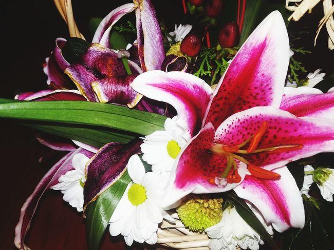 Beauty of flowers #flower  #Nature  #flora #Garden #leaves