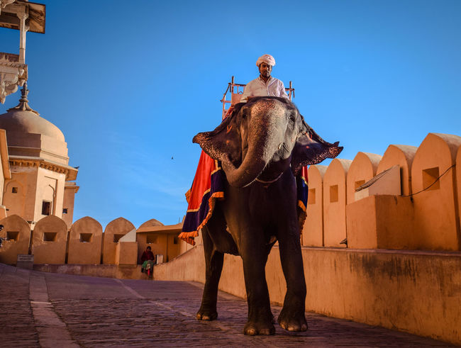 elephants are sooo huge but still so cute. Rajasthan Jaipur Animal Themes Architecture Blue Building Exterior Built Structure Clear Sky Culture Day Domestic Animals Elephant Full Length Mammal Nature One Animal One Person Outdoors People Rajasthan Rajasthandiaries Real People Shadow Sky Standing Travel Destinations