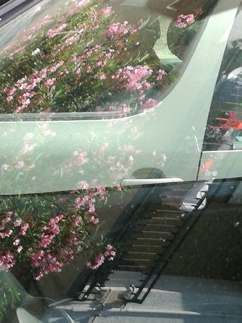 Carreflection collection Flower No People Outdoors The Week Of Eyeem Daylight Photography Close-up Mobilephotography Huaweip9photos The Purist (no Edit, No Filter) Nofilter Noedit Tree Carreflection Phoneography Glass Reflections Transportation Abstract Photography Vehicle Part Reflection Carreflection Collection