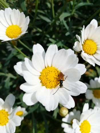 Flower Insect Petal Yellow Plant Flower Head Fragility One Animal Freshness Nature Animal Wildlife Beauty In Nature Uncultivated Outdoors Bee No People Close-up Day Animals In The Wild Pollination