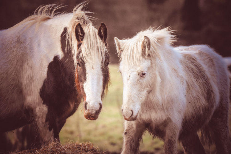Close-up of horses on field