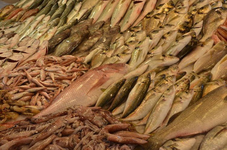 Close-up Fish Food Food And Drink Freshness Healthy Eating Market No People Raw Food Seafood