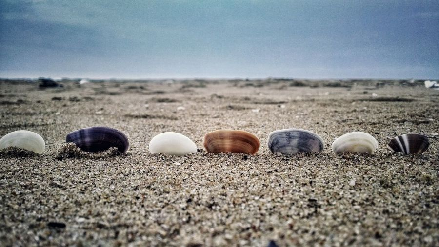 Close-Up Of Seashells Arranged In Sand