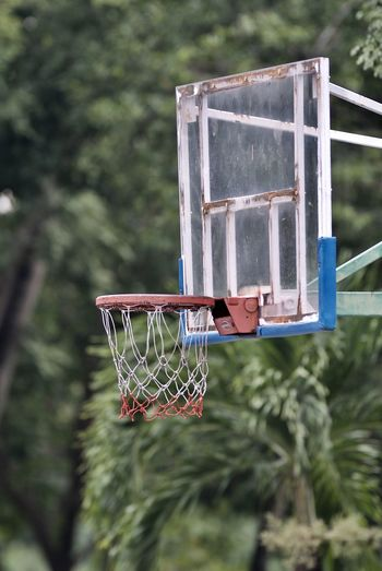 Low angle view of basketball hoop against tree
