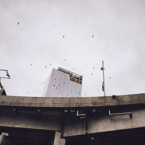 Low angle view of birds flying in city against sky
