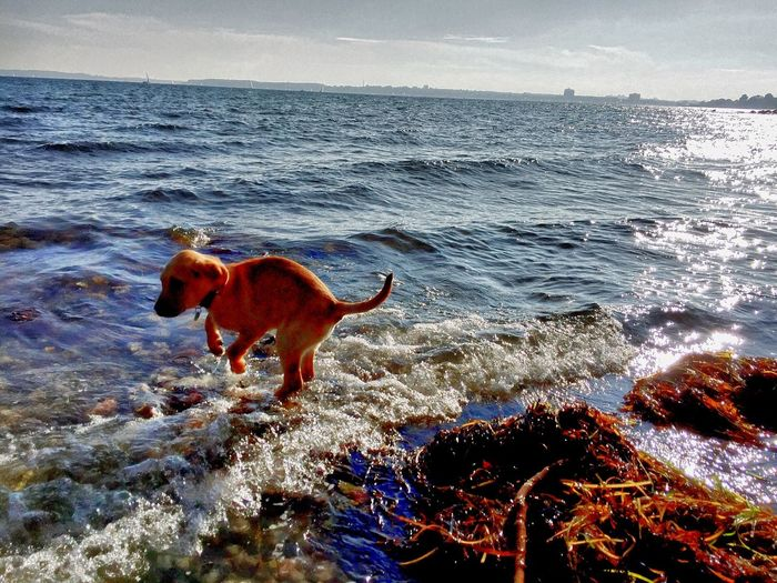 Skippy Animal Themes Beach Beauty In Nature Day Dog Domestic Animals Horizon Over Water Mammal Nature No People One Animal Outdoors Pets Sea Skippy Sky Water