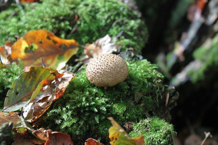 Teutoburger Wald Teutoburg Forest Herbststimmung Autumn Pilz Mushroom Fall Beauty Colors Of Autumn Autumn Colors