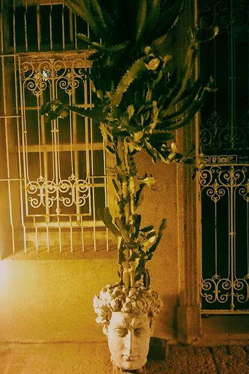 他!仙人掌頭🌵🌵🌵。 Cactus 神農街 Tainan, Taiwan 文青