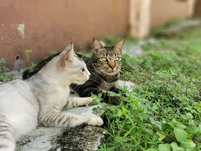 Portrait of cat sitting on grass