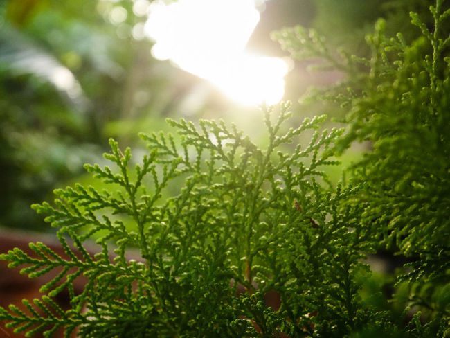 Beauty In Nature Close-up Day Freshness Green Color Growth Leaf Nature No People Outdoors Plant Sunlight