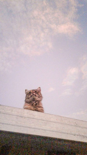 Cat sitting on wall against sky