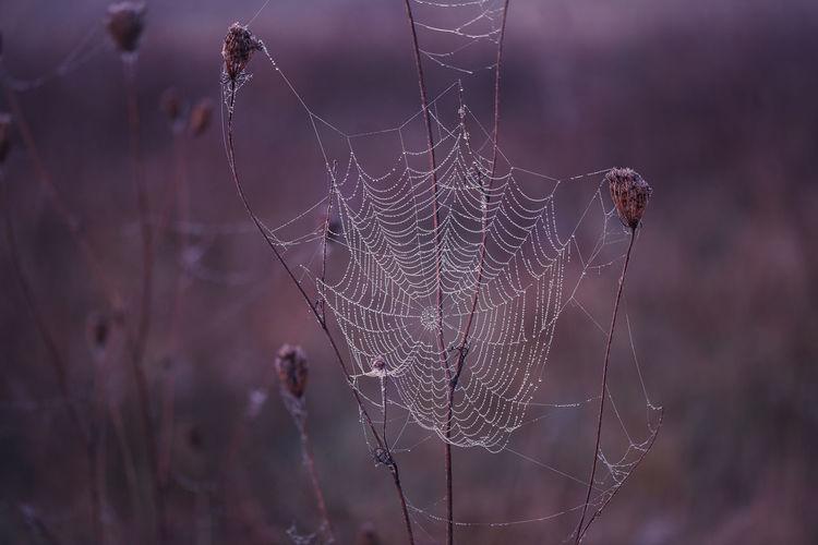 ©️941 spider