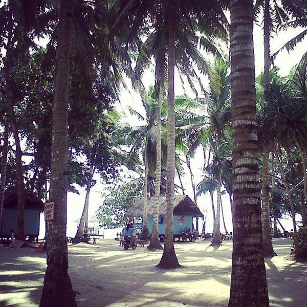 nipa and trees Nature Letsgoback Philippines