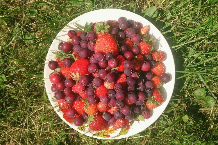 Летние ягоды. натюрморт ягоды Еда Food Berries Still Life No People Fruit Healthy Eating Strawberry Grass Close-up