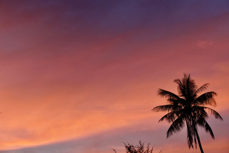 Tropical Climate Palm Tree Sky Tree Sunset Plant Beauty In Nature Nature Idyllic No People Scenics - Nature Silhouette Coconut Palm Tree Dusk Tropical Tree Copy Space Tranquil Scene Orange Color Tranquility Twilight Palm Leaf Outdoors Romantic Sky Background