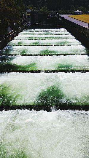 Bonneville Dam Oregon Fish Ladder