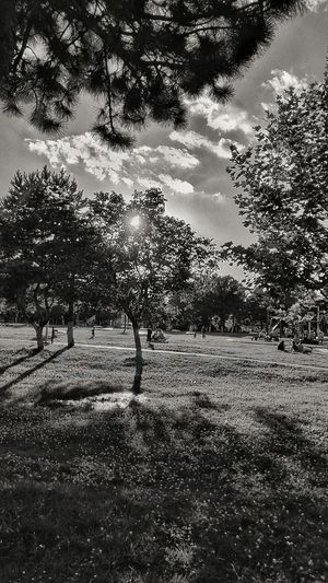 Sun Behind Trees Light And Shadow Sunbeam Clouds And Sky Blackandwhite Photography Black And White Tree Sunlight Sky Idyllic Tranquil Scene Bare Tree Calm Non-urban Scene Growing Branch Tranquility Scenics