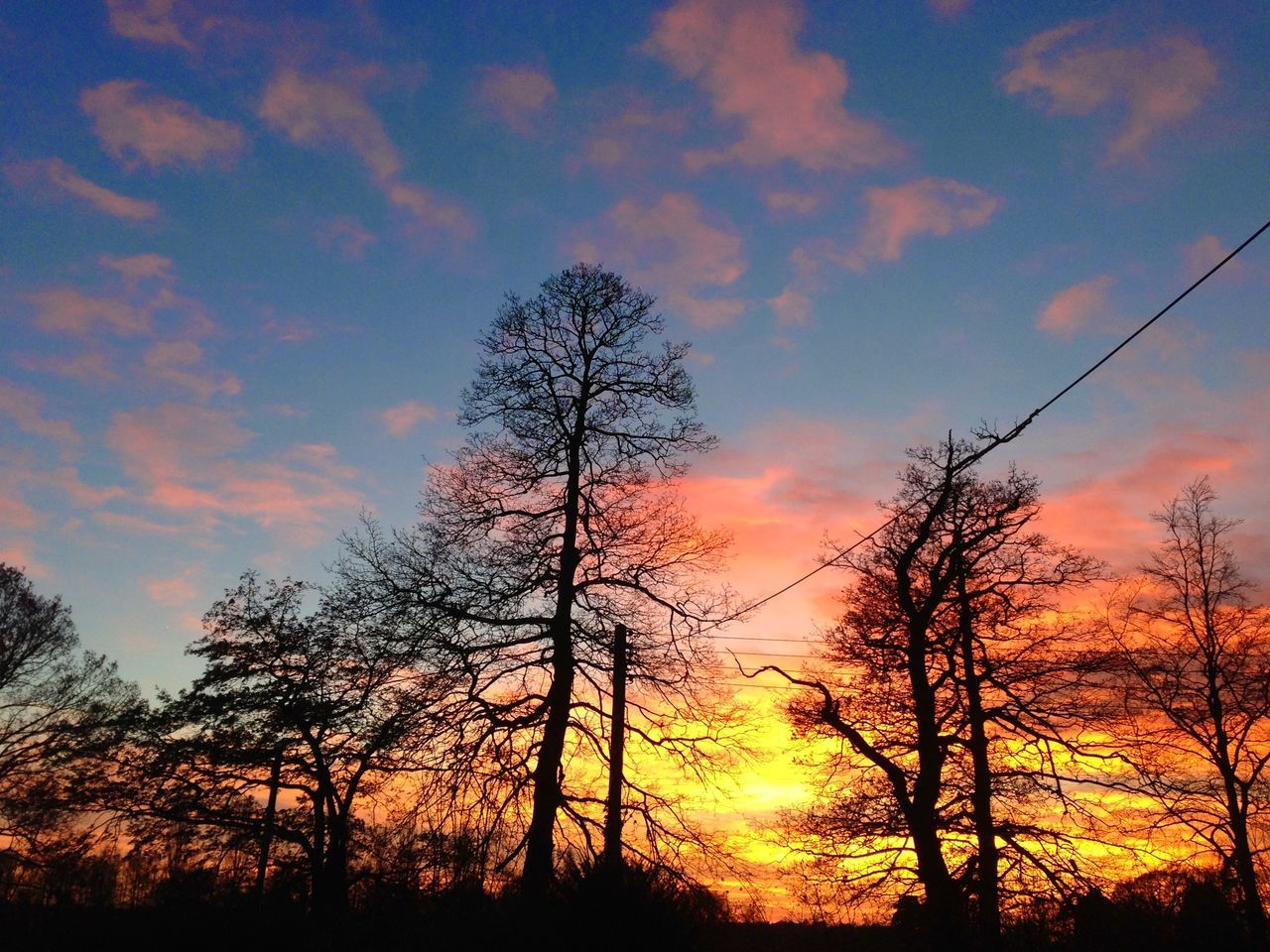 tree, sunset, nature, beauty in nature, tranquil scene, tranquility, sky, scenics, silhouette, orange color, no people, low angle view, majestic, outdoors, cloud - sky, landscape, forest, bare tree, day