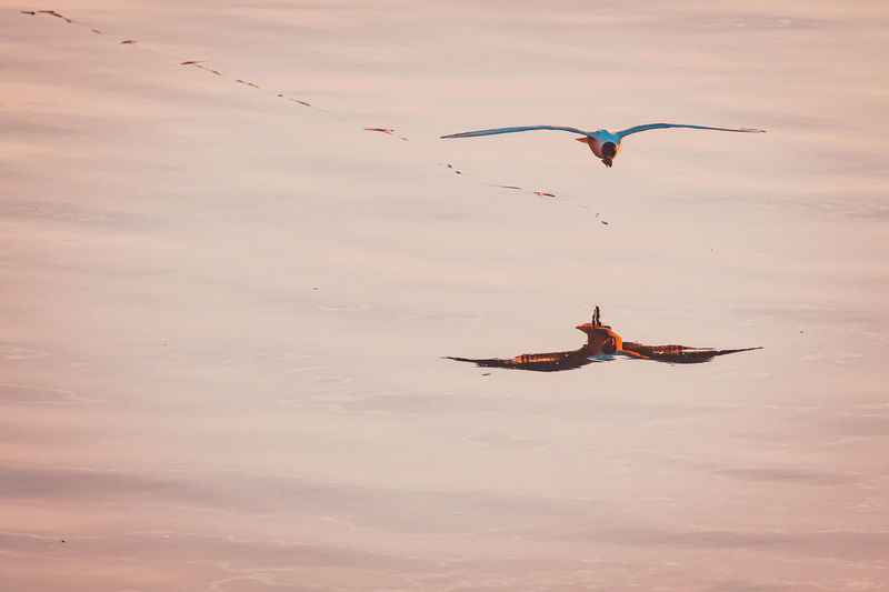 Seagulls flying above the river