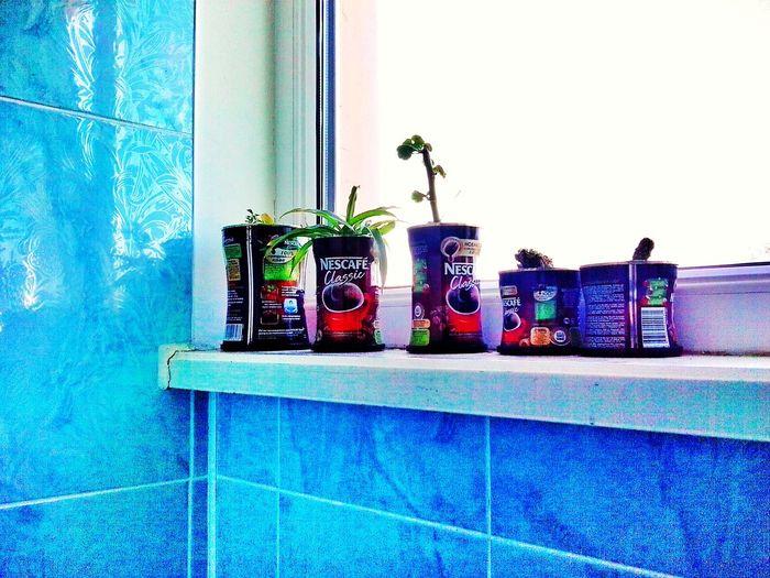 Расцвет кофе Working Beautiful Day Drinks кофе