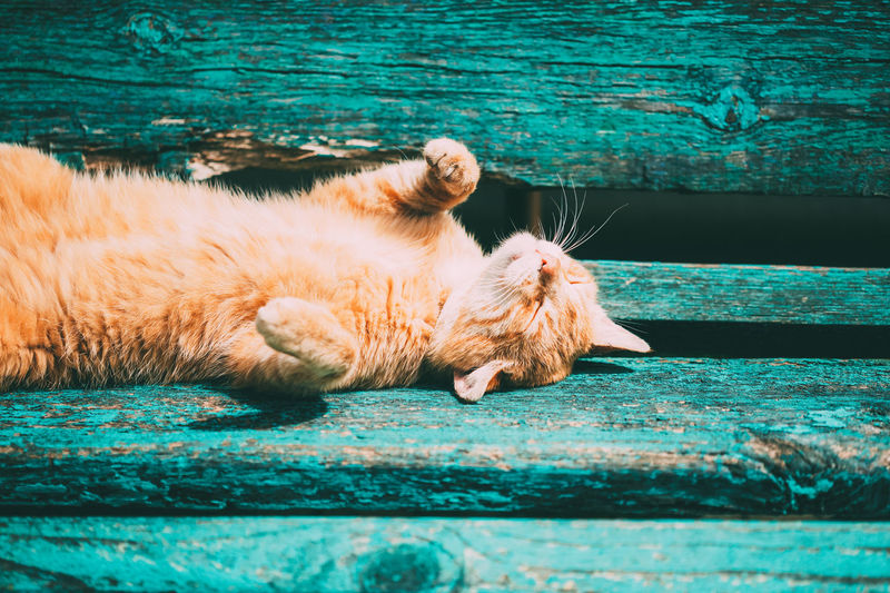 Funny Red Kitten Cat Sleeping On A Bench In Park In Hot Summer Day Animal Beautiful Breed Cat Cute Funny Ginger Ginger Cat Hot Kitten Kitty Orange Paws Pet Play Playful Pretty Purebred Red Resting Spring Summer Sun Warm Young Relaxation Feline Bench