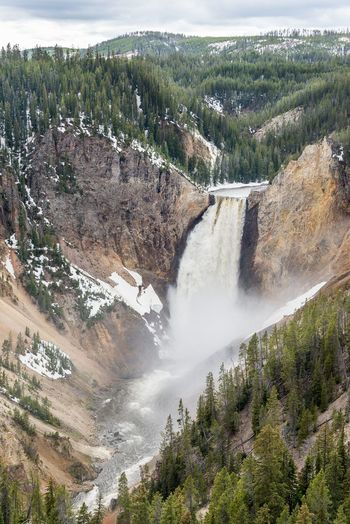 """Lower Falls"" Great and classic view of the amazing Lower Falls at the Grand Canyon of the Yellowstone . Yellowstone National Park, Wyoming, USA. Grand Canyon Of The Yellowstone Hiking Lower Falls Of The Yellowstone Nature USA Wyoming Yellowstone National Park Beauty In Nature Day Falls Landscape Lower Falls Mountain Nature No People Outdoors Power In Nature Scenics Sky Tree Water Waterfall Waterfalls"