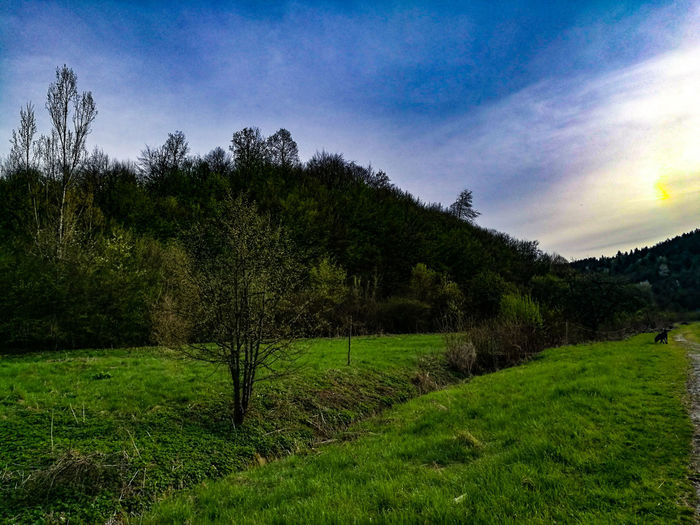 Relaxation for eyes :) Agriculture Tree Growth Nature Field Beauty In Nature Green Color Rural Scene No People Tranquility Landscape Outdoors Scenics Sky Grass Day Freshness Bosna I Hercegovina Bosna ♡ Bosnia And Herzegovina Sarajevobosnia Sarajevo Bosnahersek Bosna Travel Destinations Perspectives On Nature