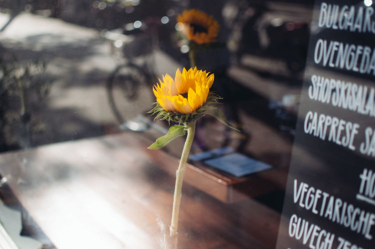 Amsterdam, last year. Beauty In Nature Close-up Communication Day Flower Flower Head Fragility Freshness Nature No People Outdoors Plant Sunflower Text Vase Wireless Technology Yellow