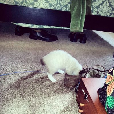 I think I'll stuff myself in a slipper. .! Arya Arya Kittyporn WhatDoWeSayToDeath nottoday