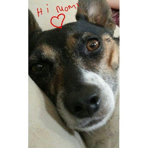 Lovemydog Ratterriersofinstagram