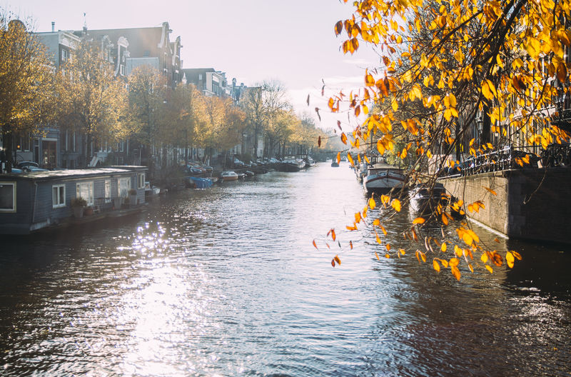 Amsterdam Water Tree Waterfront Canal Netherlands Leaves City Autumn Fall