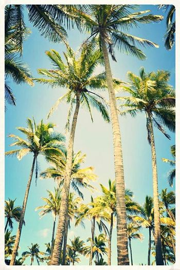 Mackay Melbourne Rocks Photography Palm Tree Summer Sky Wish I Were There Palm Trees