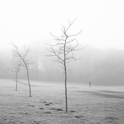 Bare Tree Beauty In Nature Branch Cold Temperature Day Fog Foggy Foggy Day Foggy Morning Foggy Weather Fogy FogyNature Landscape Landscape_photography Landscapes Nature No People Outdoors Sky Snow Tranquil Scene Tranquility Tree Water Winter