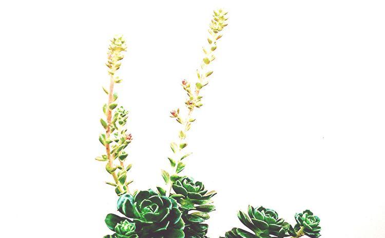 Life Flowers Plants Green Blossom Botanical Nature Natural