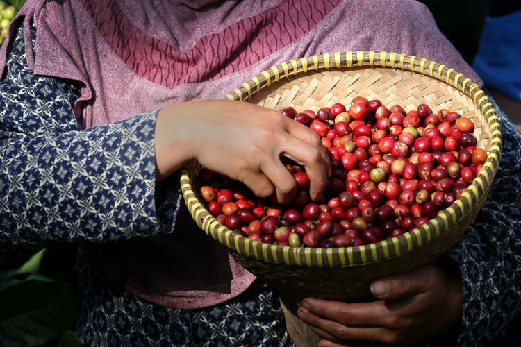 Midsection of woman holding fruits in basket