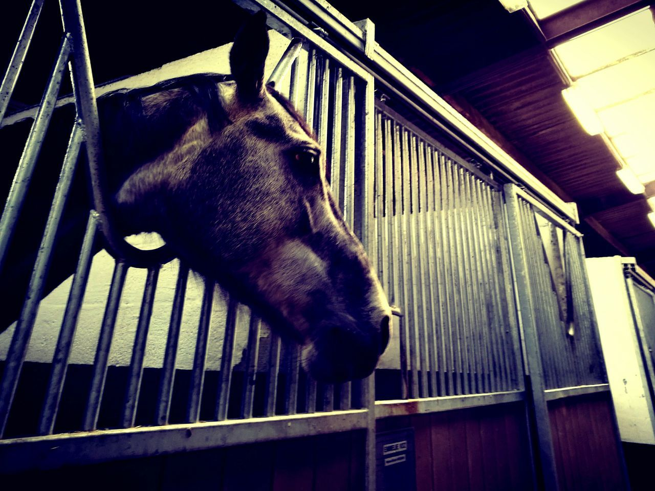domestic animals, horse, animal themes, mammal, railing, one animal, no people, livestock, indoors, day, low angle view, standing, close-up