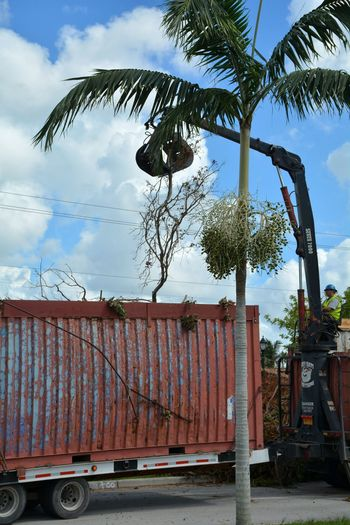 Picking up the pieces after Hurricane Irma Outdoors Hurricane Damage Storm Damage Debris Roadside Storm Debris Hurricane Irma 2017 Hurricane Relief Downed Trees Aftermath Damages Hurricane Season  Business Finance And Industry Heavy Equipment Clean Up