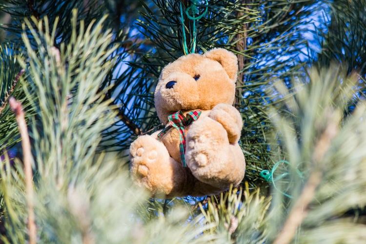 Close-Up Of Teddy Hanging On Christmas Tree