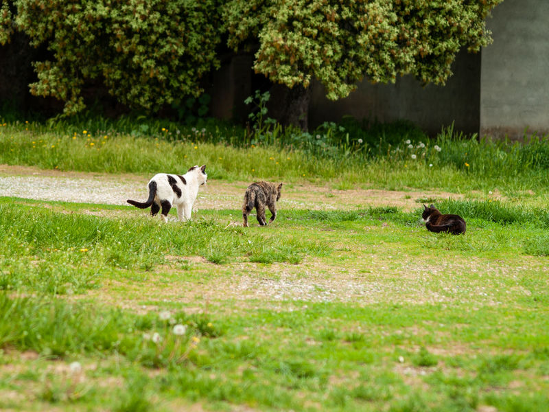 Animals In The Wild EyeEm Best Shots EyeEmNewHere Family Farm Farmland Rural Animal Animal Themes Cat Clever Countryside Cunning Day Dog Domestic Domestic Animals Domestic Cat Feline Field Friend Friendship Grass Green Color Group Of Animals Land Mammal Misterious Nature No People Pet Pets Plant Purr Rural Scene Selective Focus Spring Springtime Tree Vertebrate Whisker