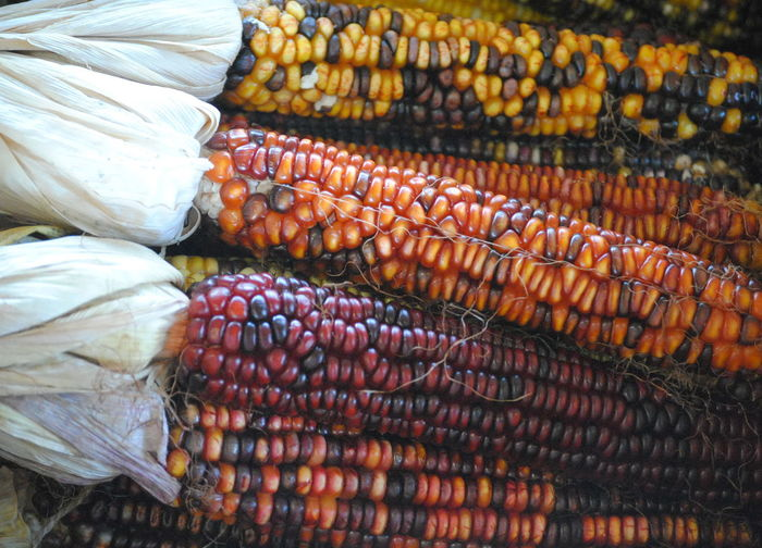 Close-up of indian corns in market during autumn
