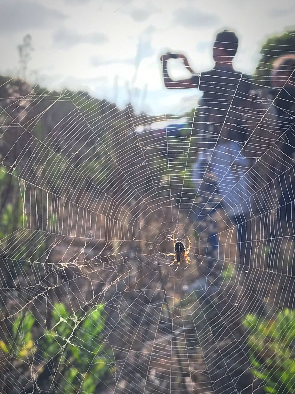 spider web, spider, web, one animal, fragility, focus on foreground, nature, close-up, animal themes, outdoors, survival, animals in the wild, no people, day, intricacy, trapped, insect, beauty in nature, freshness