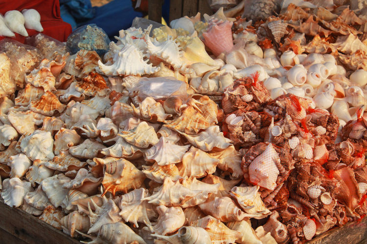 heap of conch near the sea beach Food Food And Drink Freshness Abundance Large Group Of Objects Market Wellbeing Seafood Meat Healthy Eating Animal Retail  Market Stall Choice Close-up Variation Business No People Animal Themes For Sale Snack Snell Conch