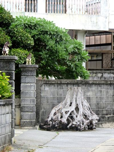 Tree No People Day Green Color Outdoors Nature Okinawa Shisa Okinawan Lion Stump Ornament Entrance Close-up