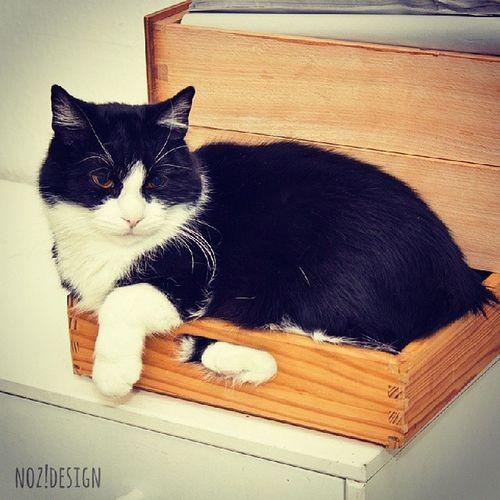 Meine Rede seit Jahren: Platz ist in der kleinsten Hütte! Cat Platzistinderkleinstenhuette Photooftheday Photography sweet lovely lovelycat sweetheart cute myhomeismycastle