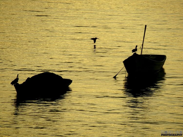 Bahia Bellavista 5am Boats Bird Birds Relaxing View Enjoying Life 43 Golden Moments Enjoying The View Canon Powershot Sx40hs photo all_shots Pic Picture Nofilter#noedit