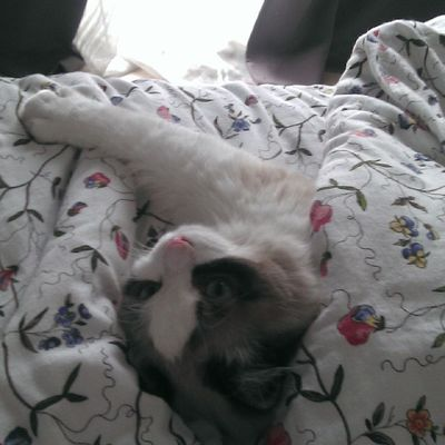 El que sabe, sabe. Srenrique Gatolicismo Gato Cat bed cama tapadito sueñomuchosueño